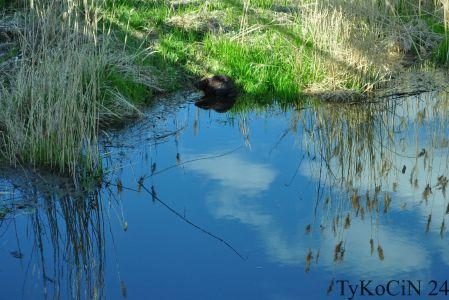 Woda w rzece najwyraźniej czysta…